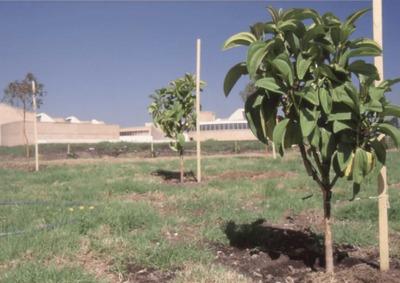 Arbustos en el área exterior de la Biblioteca Pública Virgilio Barco